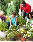 Planning and Maintaining a Community Garden